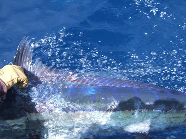florida-marlin