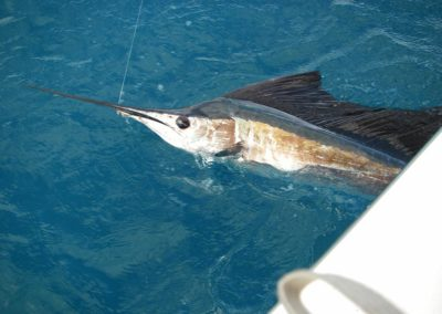 sailfish-fishing