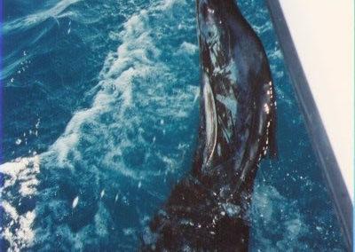 sailfishwater_jpg